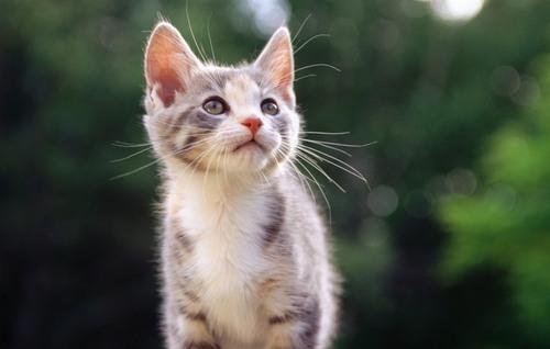 Фен-шуй: энергия от домашней кошки