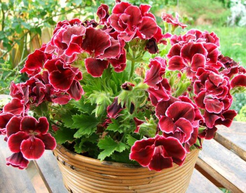 Комнатные цветы для любви и удачи