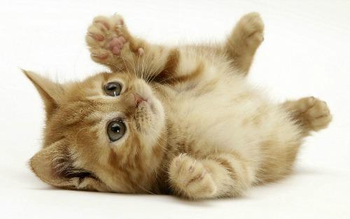 Полезность домашних кошек как врачей