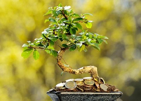Что такое дерево счастья и как его используют