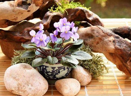 Какие цветы использовать по фен-шуй