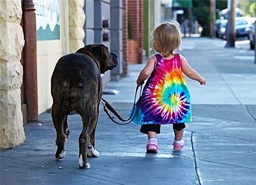 Как справиться со страхом собак