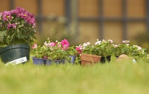 Цветы в интерьере и символика фен-шуй