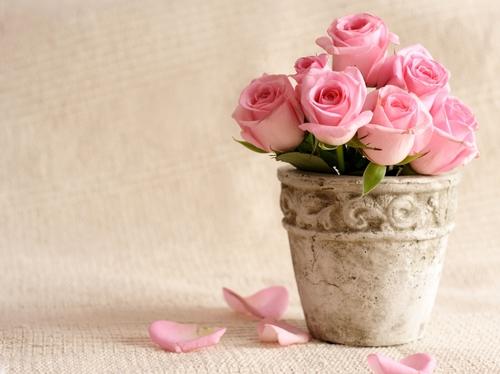 Что означают цветы по фен-шуй