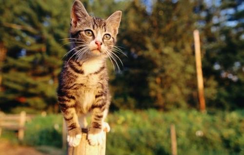Фелинотерапия: кошка как домашний целитель