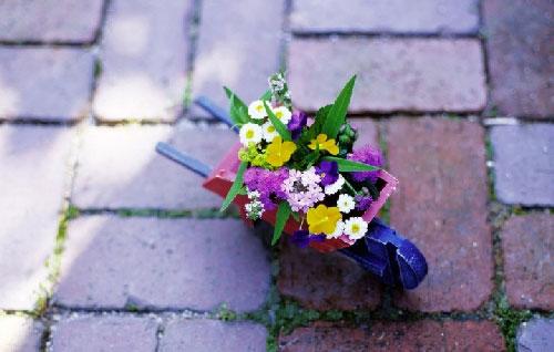 Какие растения подходят для вашего сада: советы фен-шуй