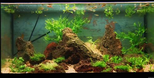 Как выбрать аквариум: советы новичкам