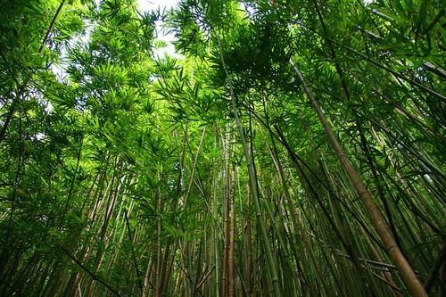 Что означает зеленый цвет в психологии