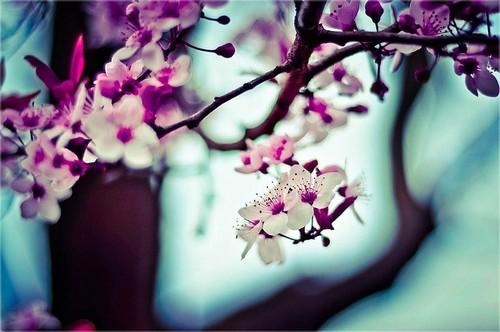 Цветотерапия: значение цветов