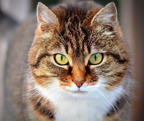 Почему мы так любим кошек и собак